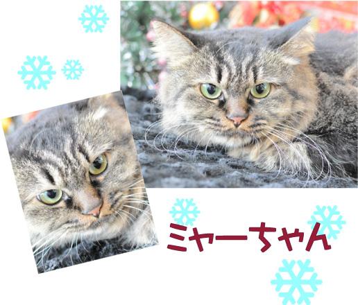 猫 ミャー