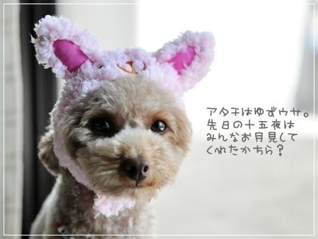 DSC_2868_20110918143735.jpg