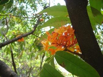 枝から オレンジ