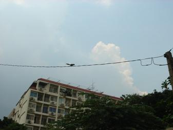 リス 電線