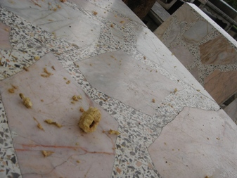 tableにトロピカルアーモンド