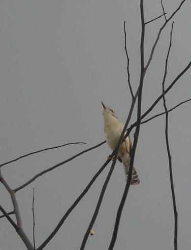 bird てっぺん