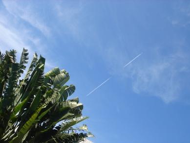 旅人の木と飛行機