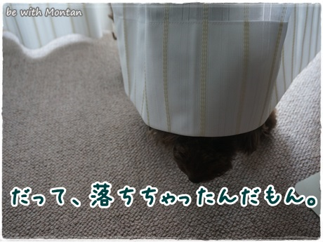 DSC09872-20140112.jpg