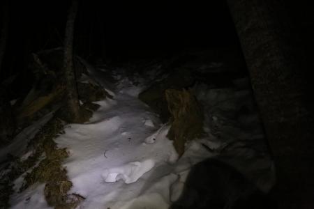 樹林帯は暗いキツイ