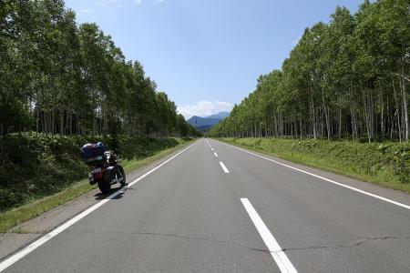 R273 三国峠手前の白樺並木