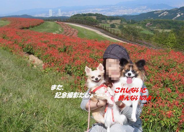 コピー ~ R0013830