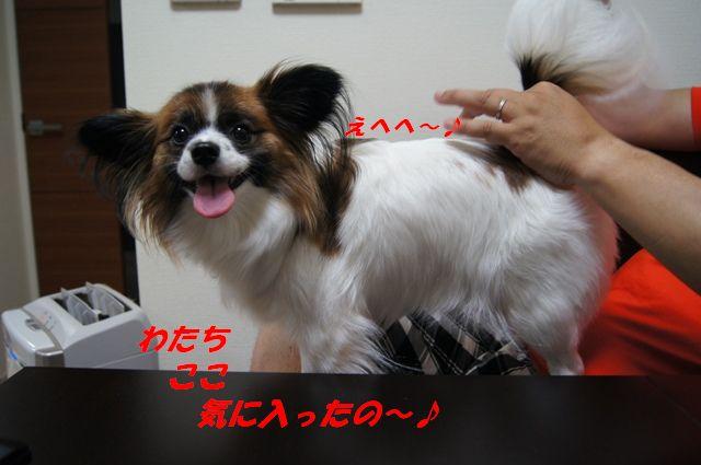 DSC01737.jpg