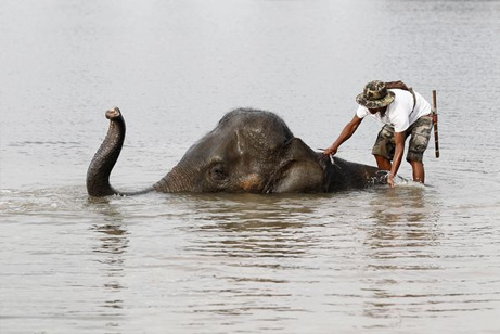 thailand-floods-unesco-elephant_41929_big洪水ゾウ