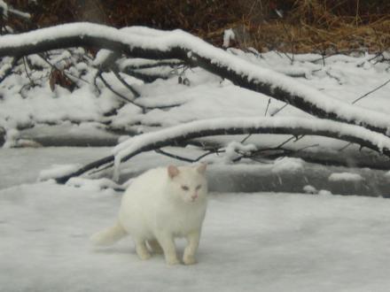 o0800060011843548729雪猫2_convert_20120330205429