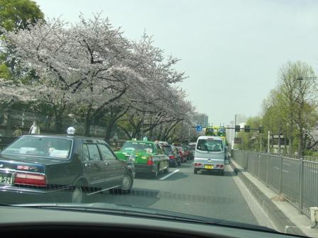 4.10イギリス大使館前の桜