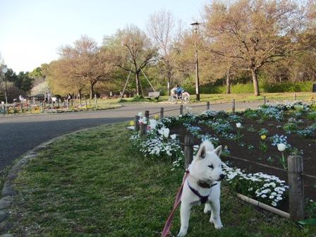 4.14芦花公園1