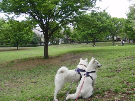4.21祖師谷公園1