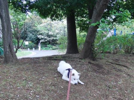 4.21祖師谷公園3