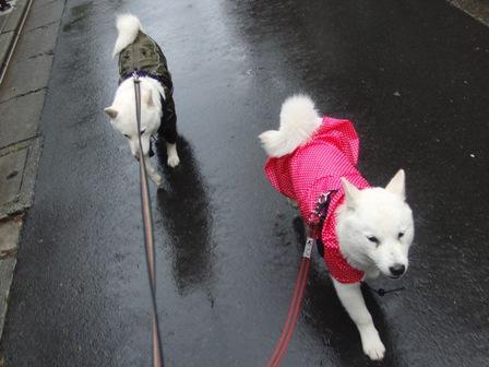 4.23雨の散歩