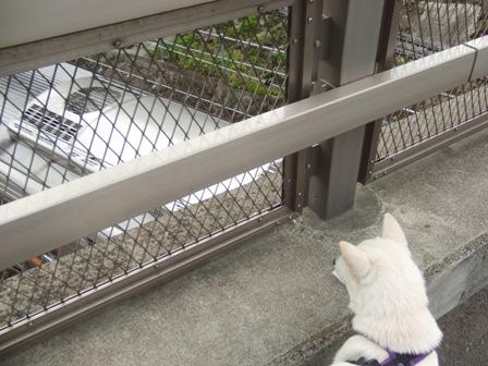 4.25橋の上から見る電車