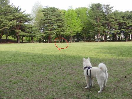 4.26野川公園1