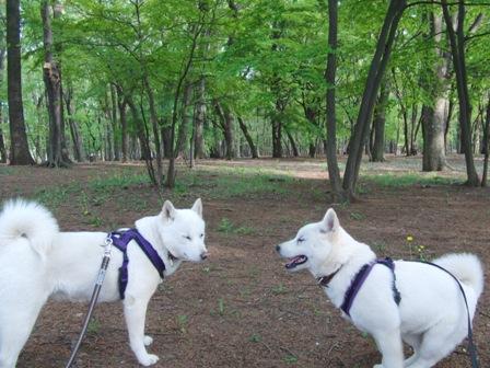 4.26野川公園7