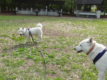 4.26野川公園5