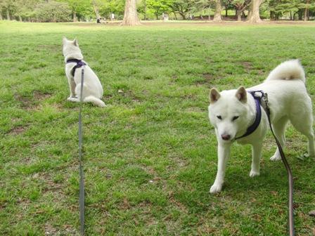 4.26野川公園11
