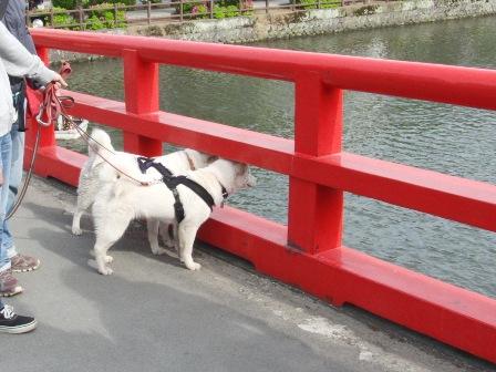 5.42学橋
