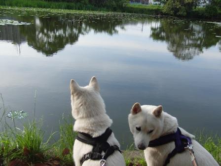 5.24蓮の池を見つめる母娘