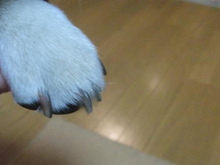 5.27花鈴の爪