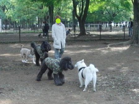 5.31代々木公園ドッグラン3