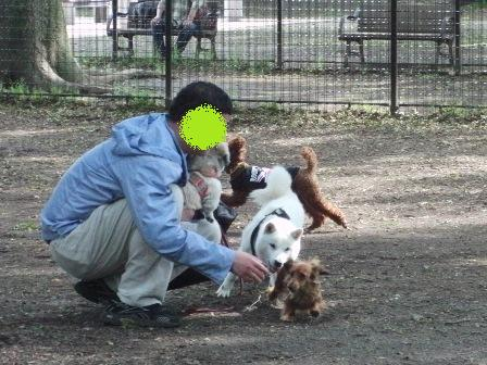 5.31代々木公園ドッグラン1