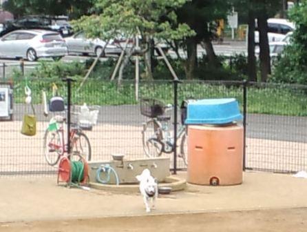 6.1芦花公園ドッグラン1