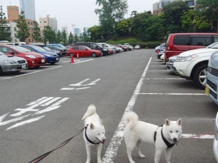 6.5代々木公園駐車場