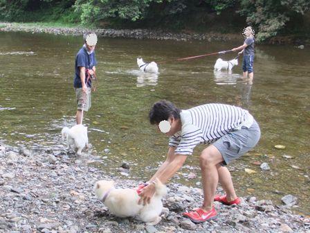 6.12白犬入水