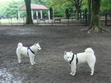 6.18代々木公園ドッグラン1