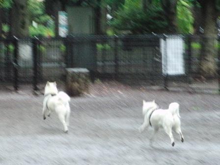 6.18代々木公園ドッグラン2