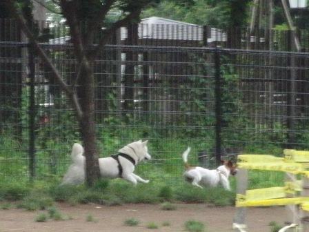 6.19芦花公園ドッグラン1