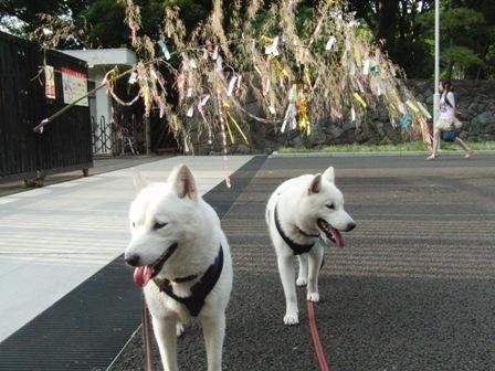 7.5代々木公園正門前の七夕飾り