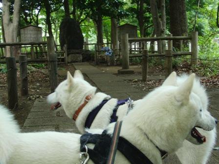 7.6芦花公園・徳富蘆花夫妻の墓