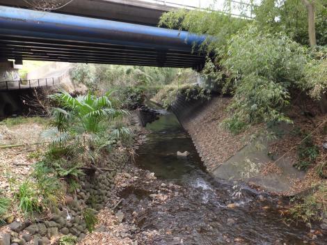 八瀬川・R129八瀬川橋下