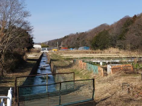 八瀬川・こぶし橋上流