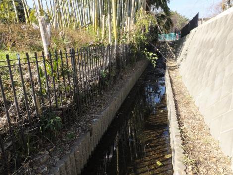 八瀬川源流・大杉の池付近