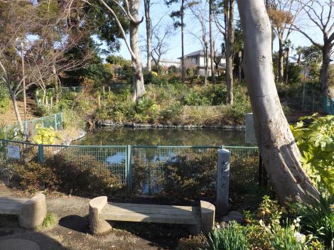 田名大杉公園・大杉の池