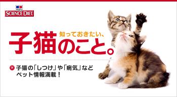 show猫