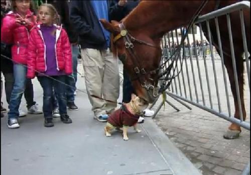 NYPD+Horse_Luella_convert_20111129045700.jpg