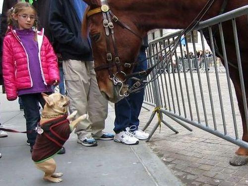 NYPD_horse_french_bull.jpg