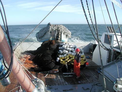 sardine_boat 67