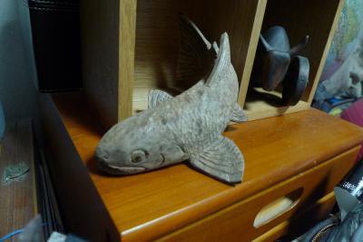 神代楠岩魚6