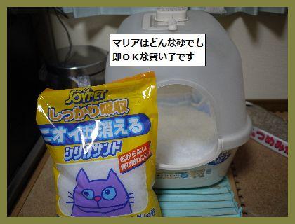 猫5 (1)