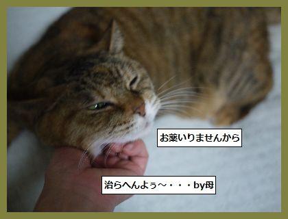 お祝い4 (1)