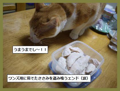 ふゆ2 (1)