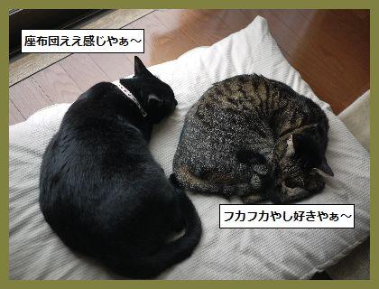ふゆ5 (1)